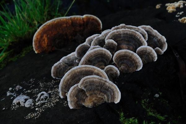 Fungi by KarlmarxEra