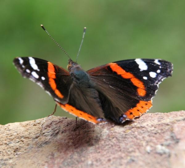 Butterfly by EDan