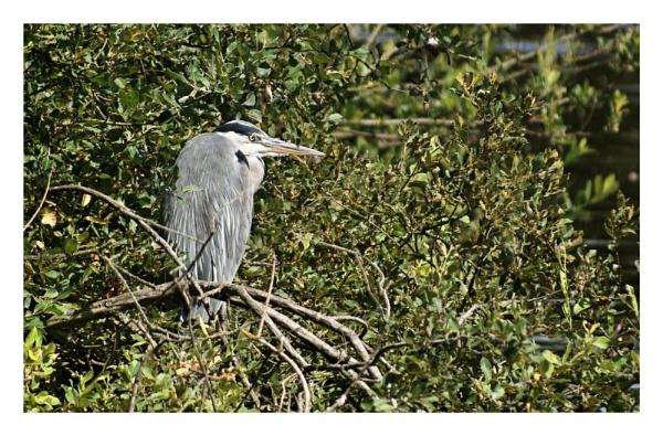 Attenborough Nature Reserve by jonny_greentree