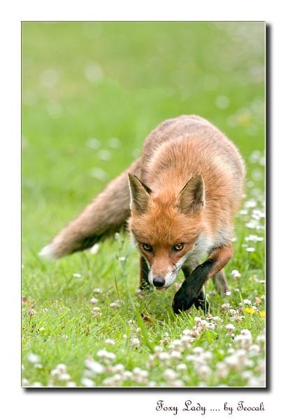 Foxy Lady by teocali