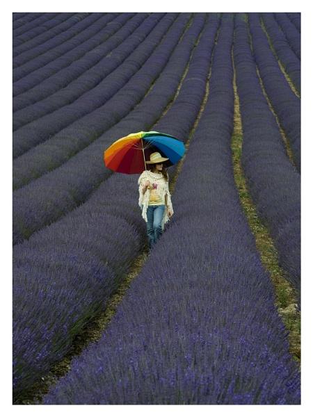Lavender Girl by paddyman