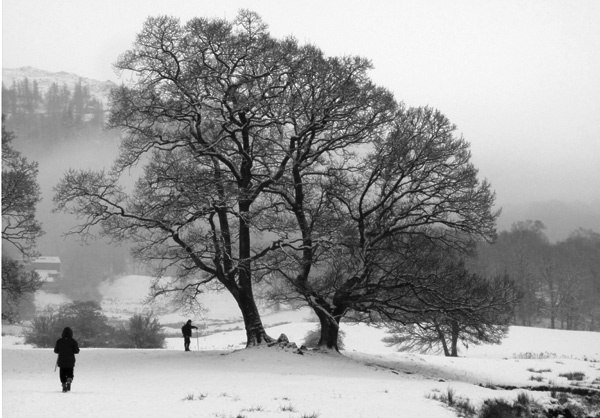 A walk in the Snow by Genuinedabber