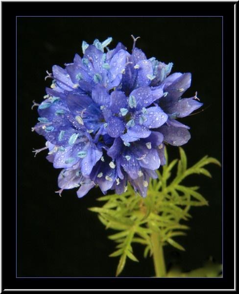 purple flower by jdgrimsay