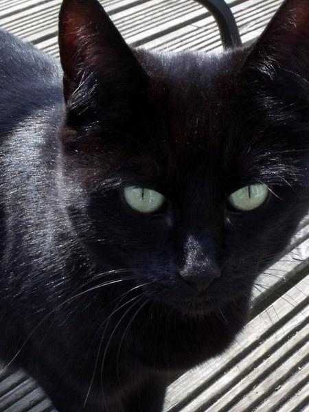 cat by kibp