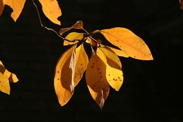 Leaves by shalik