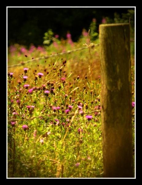 Meadow by Ianto74