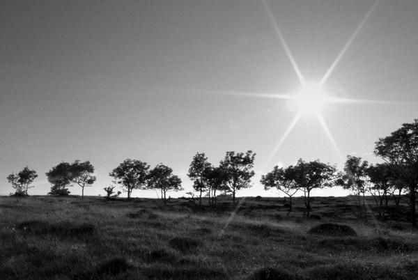 Sun-Star* by rach_h