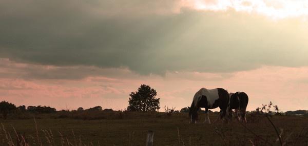 Sunset Horses by mark_wood