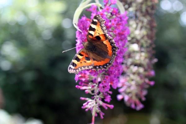 butterfly by tech