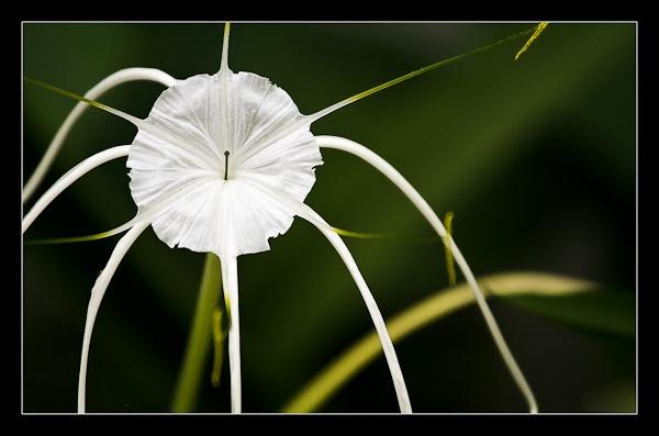 Flower needs naming? by Artful_Dodger
