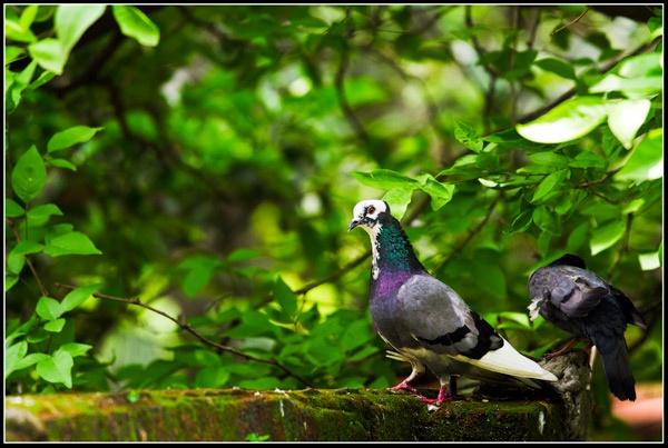 Pigeons by Artful_Dodger