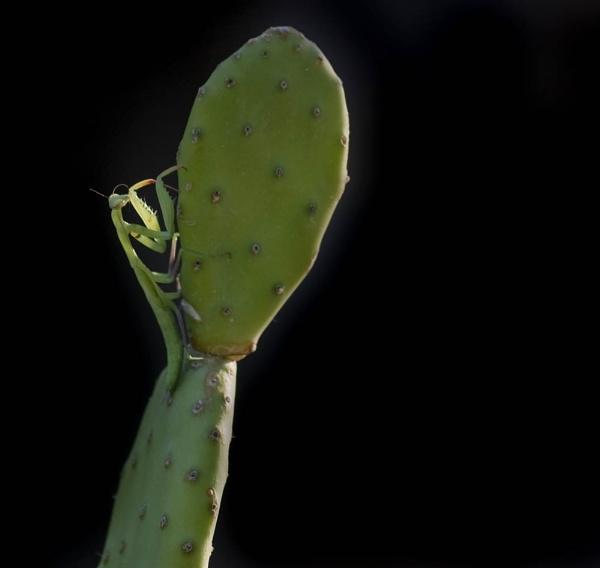 Cactus & Mantis
