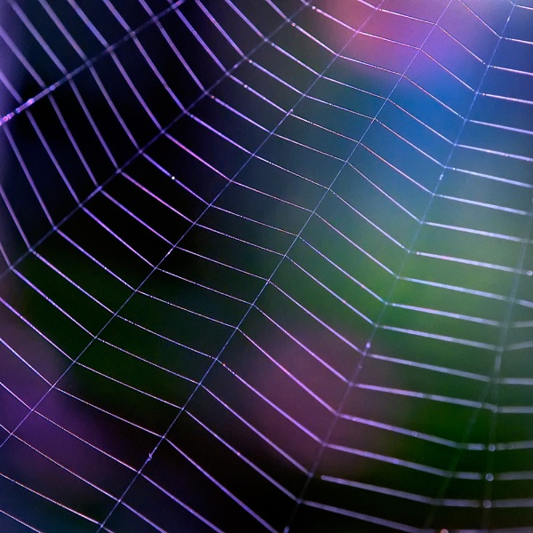 The Web by taggart