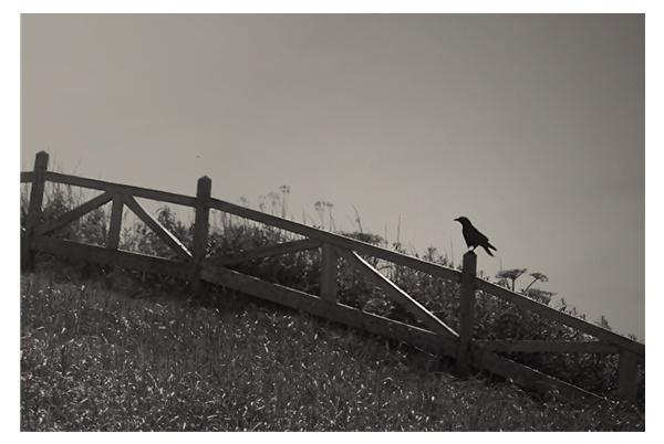 Ravensgate by A_Harrison