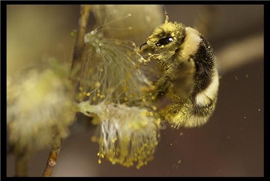 BEE-BOP by A_Harrison