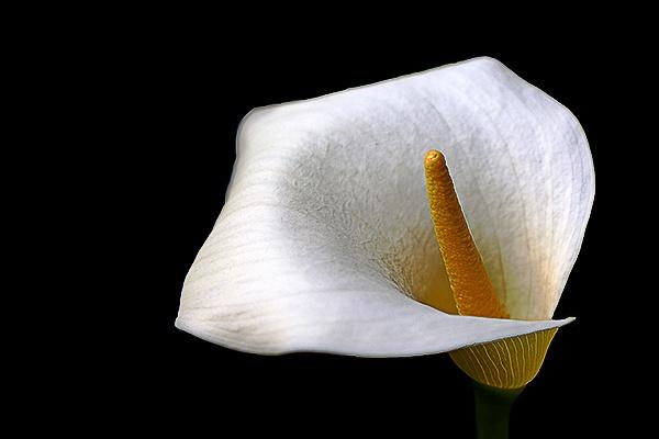 Flower 1 by hollkj