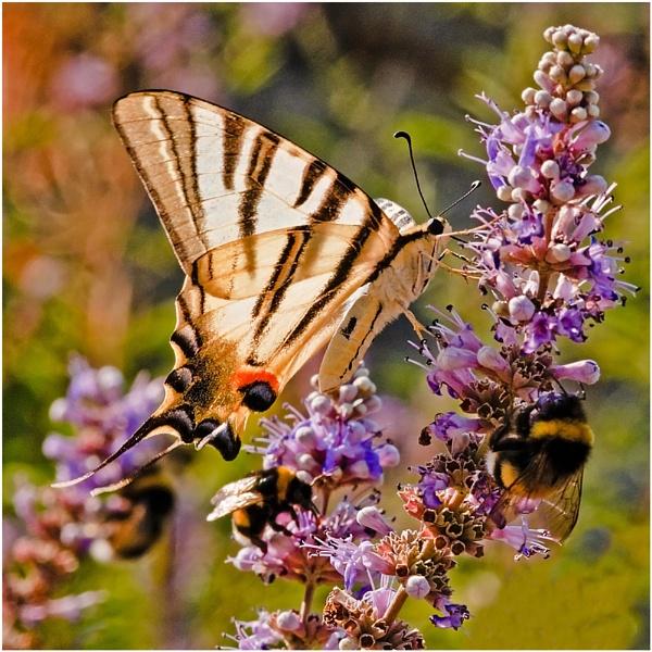 Butterfly Breakfast Bar by Scutter