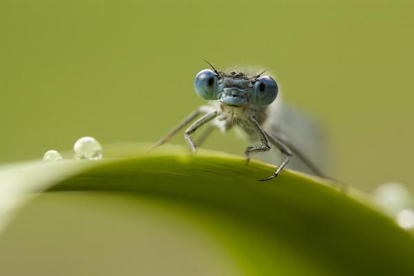 Blue eyes by Angi_Wallace