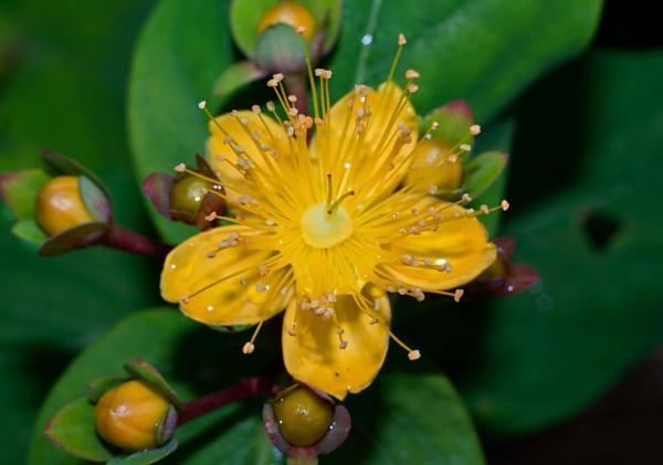 yellow flower head by HuntedDragon