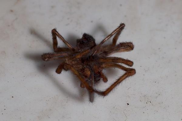spider end. by HuntedDragon