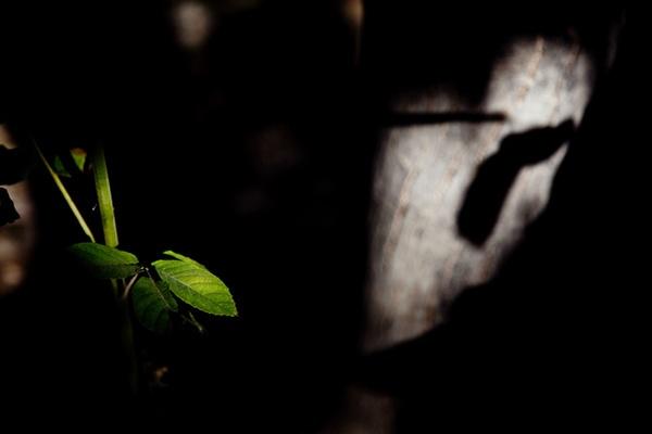 Leaves by aminnadi