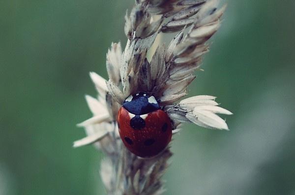 ladybird by Tamar