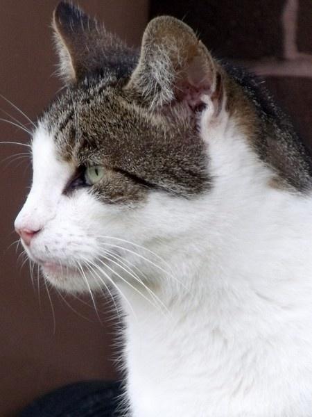 neighborhood cat by kibp