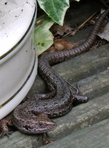 newt by kibp