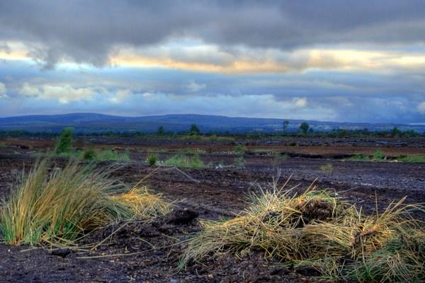 Long bog Grass by Beladd