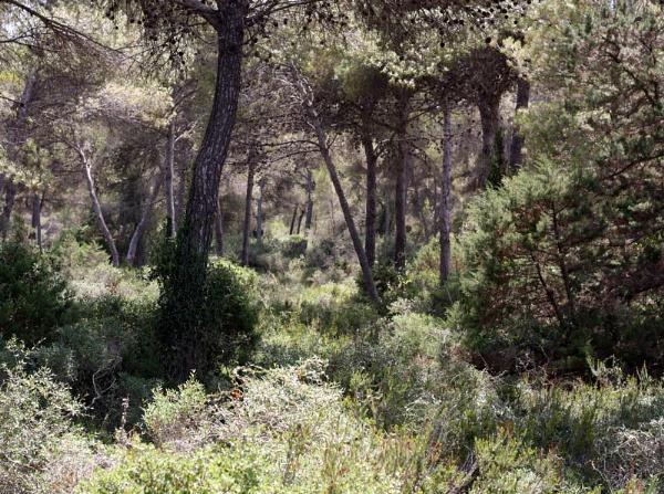 pine wood by glenheg
