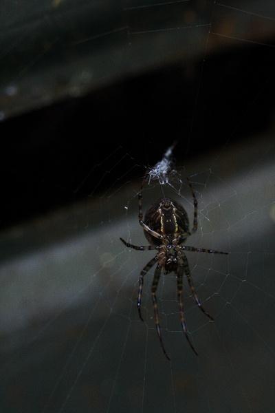 Garden Spider 2 by mojave79