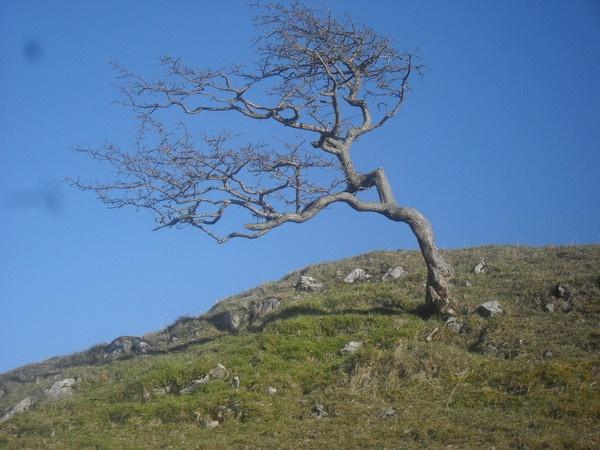 tree by Gracehi12