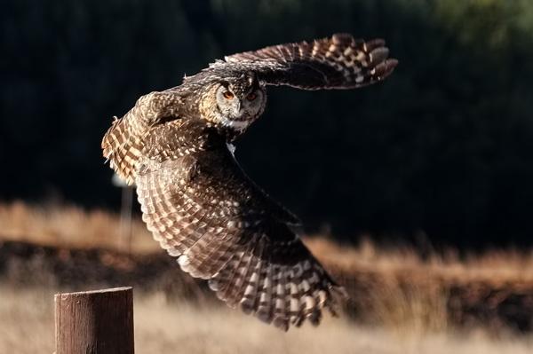 Takeoff by Schaune
