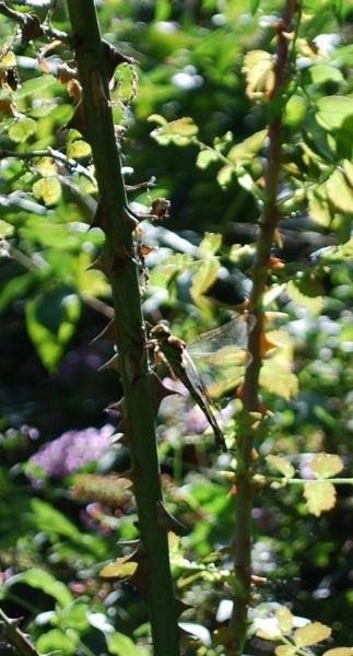 Dragonfly by toniiixx