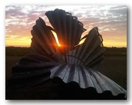 Aldeburgh Shell