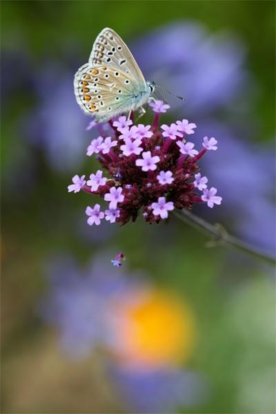 Blue by brianhaslam