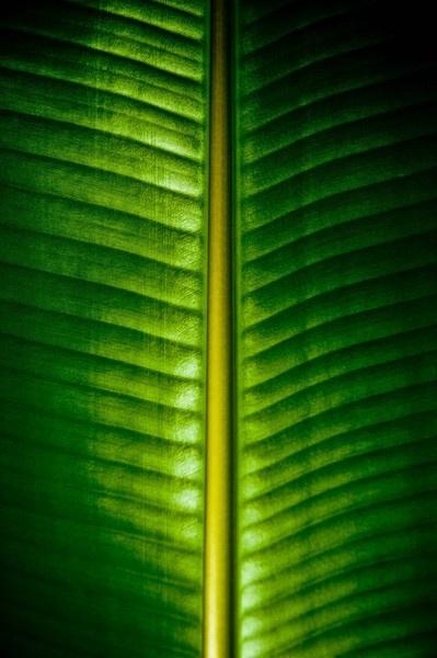 Daun Pisang (Banana leaf) by Ridefastcarveha