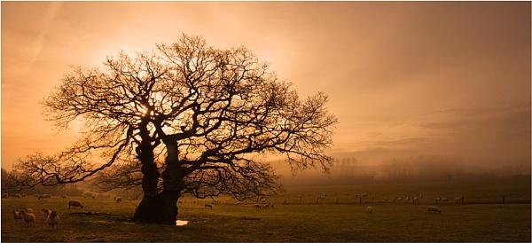 Dawn Oak by Kris_Dutson