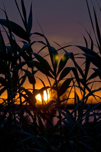 Falling Sun by Alan86