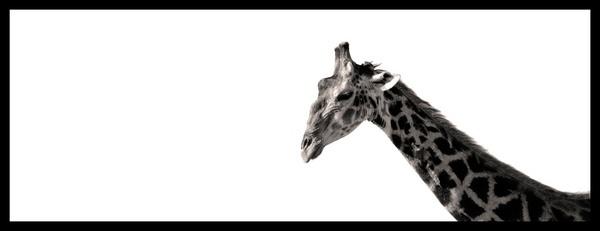 Giraffe by Bokkie