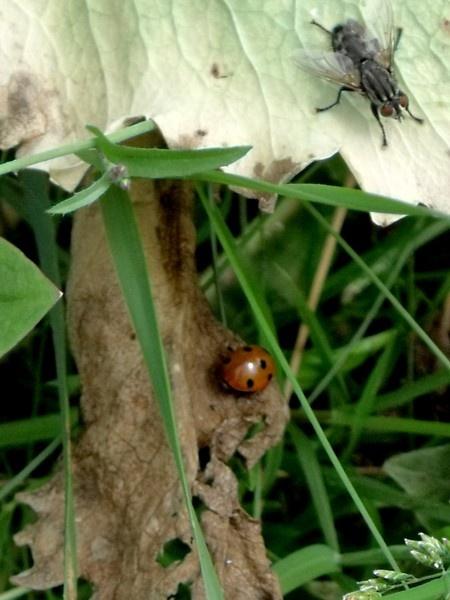 It\'s a bugs life by kibp