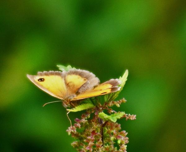 Butterfly Bokeh by LilyWren