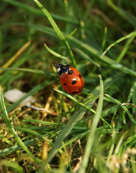Ladybird by LaurenRyanne