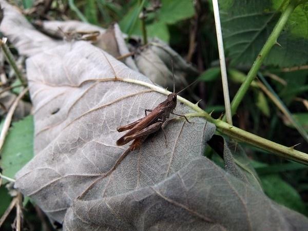 Grasshopper by lenalull