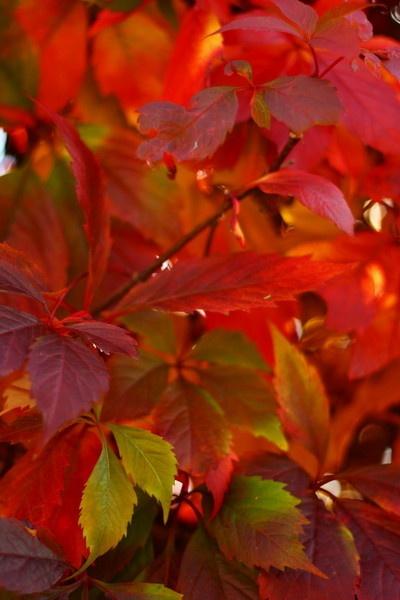 autumnal beginnings by dEOSnnis70
