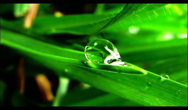Drop of life.................... by arpit_saha