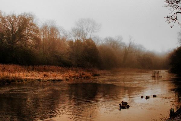 Gold Dawn by Beladd