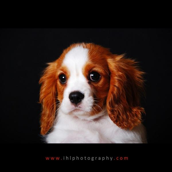 Freddie by ihlphotography
