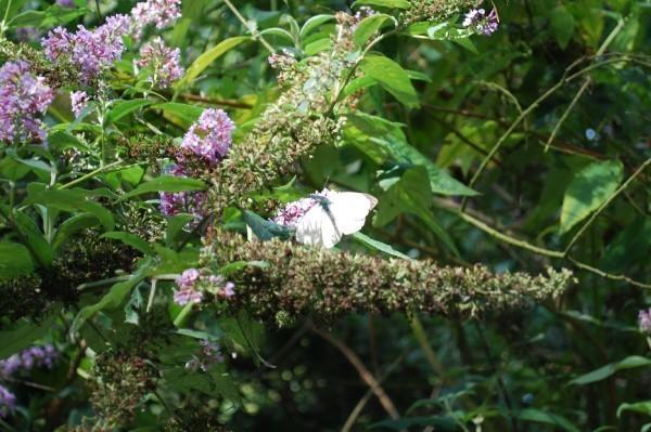 Butterfly by toniiixx