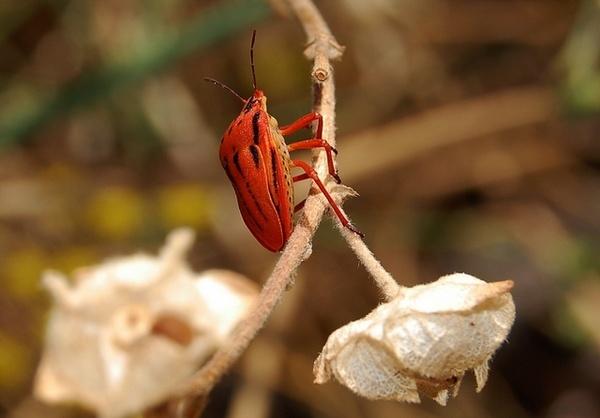bugshield!! by Nicolasf96